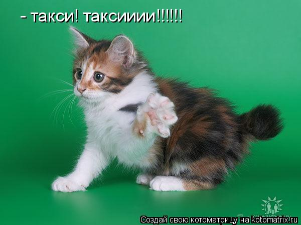 Котоматрица: - такси! таксииии!!!!!!