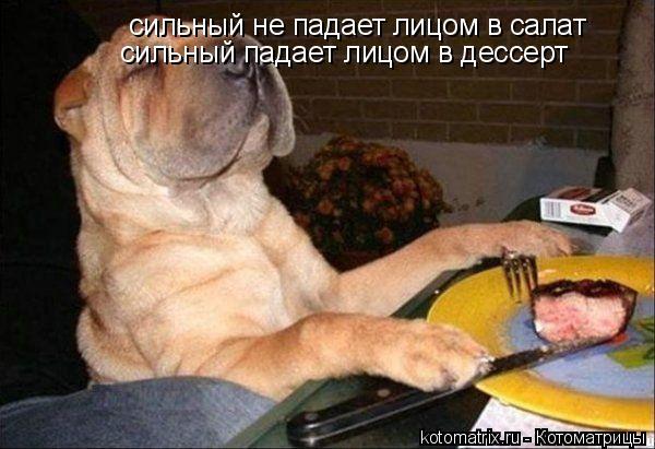 Котоматрица: сильный не падает лицом в салат сильный падает лицом в дессерт