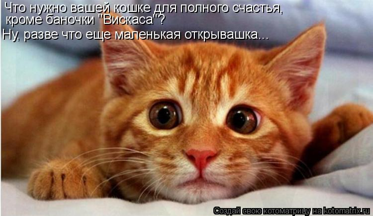 """Котоматрица: Что нужно вашей кошке для полного счастья, кроме баночки """"Вискаса""""? Ну, разве что еще маленькая открывашка..."""