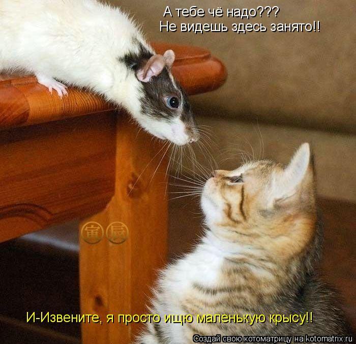Котоматрица: А тебе чё надо??? Не видешь здесь занято!! И-Извените, я просто ищю маленькую крысу!!