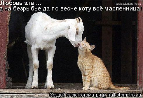 Котоматрица: Любовь зла ... а на безрыбье да по весне коту всё масленница!