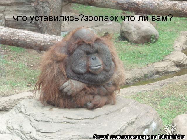 Котоматрица: что уставились?зоопарк что ли вам?