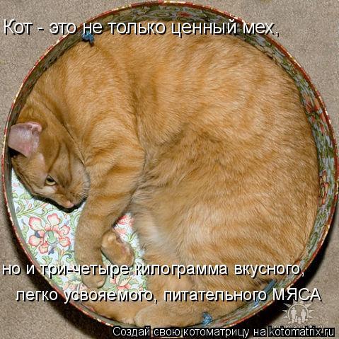 Котоматрица: Кот - это не только ценный мех, но и три-четыре килограмма вкусного, легко усвояемого, питательного МЯСА