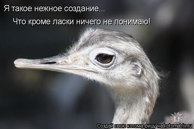 Котоматрица: Я такое нежное создание... Что кроме ласки ничего не понимаю!