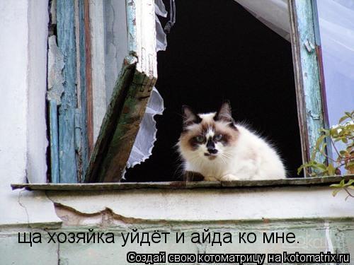 Котоматрица: ща хозяйка уйдёт и айда ко мне.