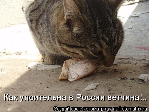 Котоматрица: Как упоительна в России ветчина!..