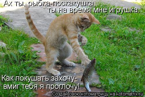 Котоматрица: Ах ты, рыбка-поскакушка, ты на время мне игрушка. Как покушать захочу- вмиг тебя я проглочу!