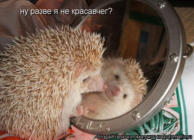 Котоматрица: ну разве я не красавчег?