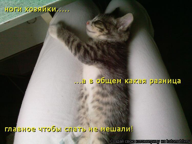 Котоматрица: ноги хозяйки..... а в общем какая разница ноги хозяйки.....   ...а в общем какая разница главное чтобы спать не мешали!