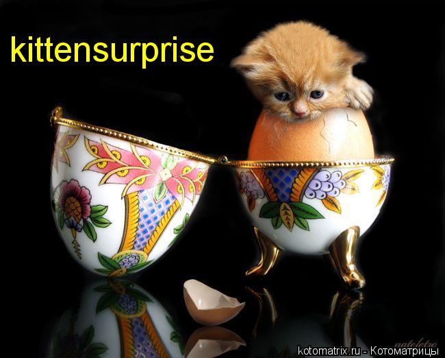 Котоматрица: kittensurprise