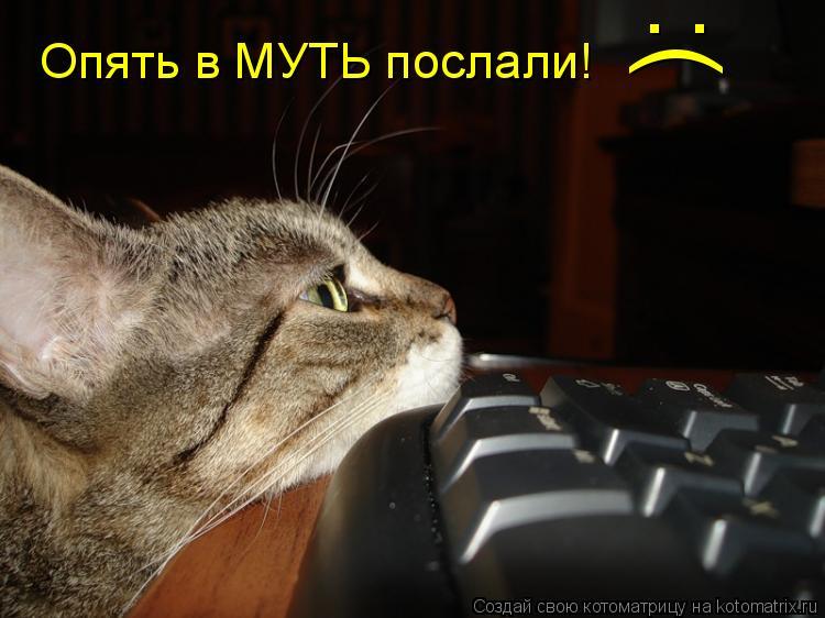 Котоматрица: Опять в МУТЬ послали! :(