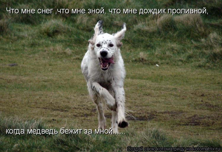 Котоматрица: Что мне снег ,что мне зной, что мне дождик проливной, когда медведь бежит за мной......