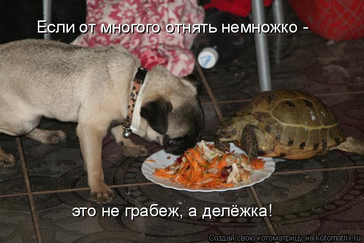 Котоматрица: Если от многого отнять немножко -  это не грабеж, а делёжка!