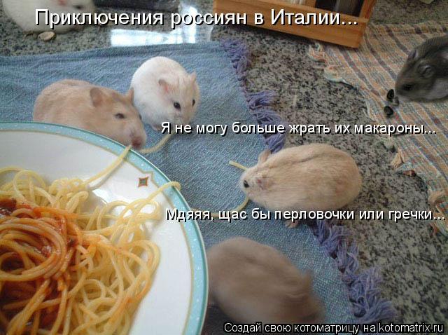 Котоматрица: Приключения россиян в Италии... Я не могу больше жрать их макароны... Мдяяя, щас бы перловочки или гречки...