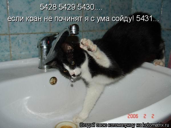 Котоматрица: 5428 5429 5430.... если кран не починят я с ума сойду! 5431...