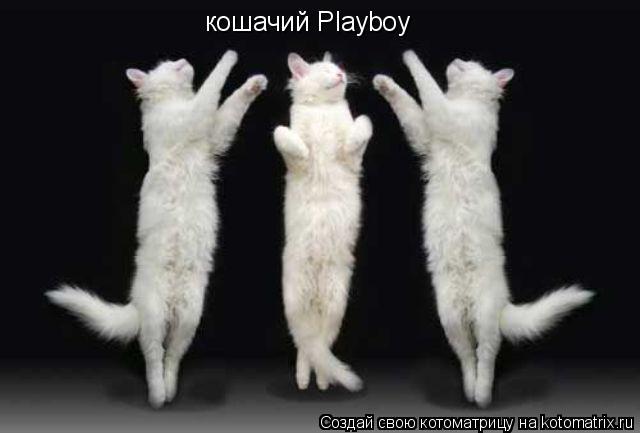 Котоматрица: кошачий Playboy