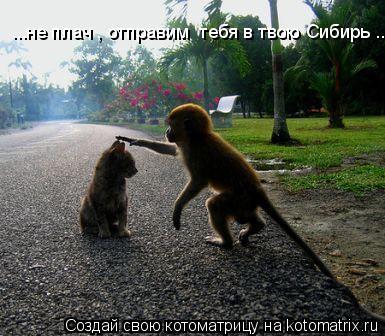 Котоматрица: ...не плач , отправим  тебя в твою Сибирь ..