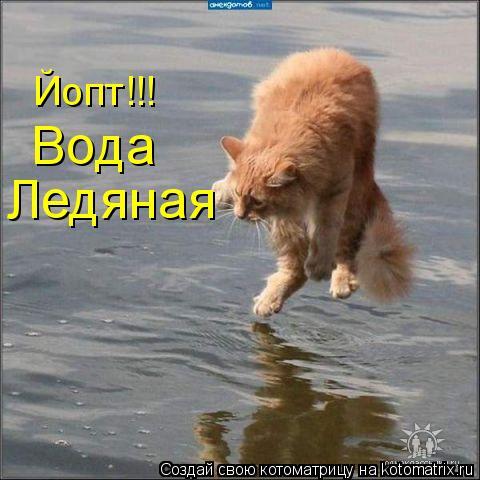 Котоматрица: Вода  Ледяная Йопт!!!
