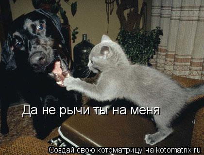 Котоматрица: Да не рычи ты на меня