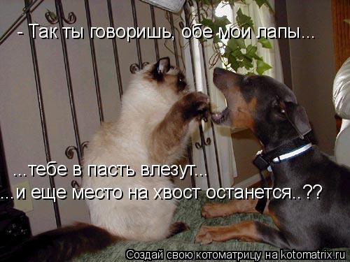Котоматрица: - Так ты говоришь, обе мои лапы... ...тебе в пасть влезут... ...и еще место на хвост останется..??