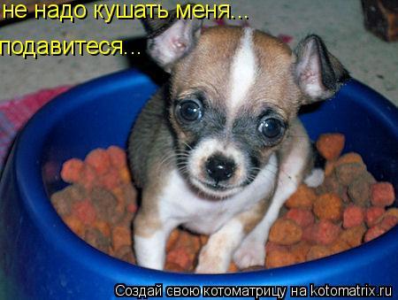 Котоматрица: не надо кушать меня... подавитеся...