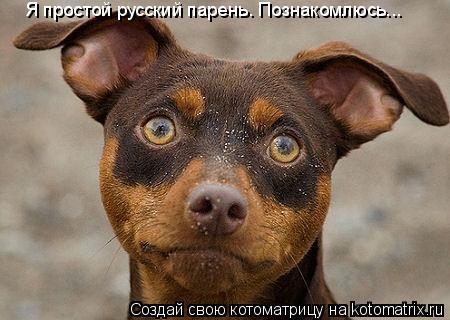 Котоматрица: Я простой русский парень. Познакомлюсь...