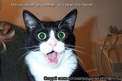 Котоматрица: Маска на литце хозяйки - это ужас что такое!..