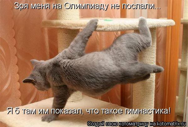 Котоматрица: Зря меня на Олимпиаду не послали... Я б там им показал, что такое гимнастика!