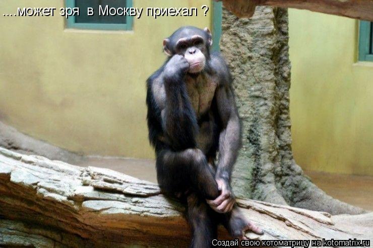 Котоматрица: ....может зря  в Москву приехал ?