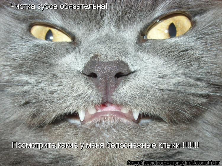 Котоматрица: Чистка зубов обязательна! Посмотрите,какие у меня белоснежные клыки!!!!!!!!