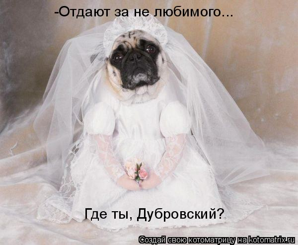 Котоматрица: Где ты, Дубровский? -Отдают за не любимого...