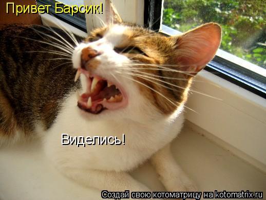 Котоматрица: Привет Барсик! Виделись!