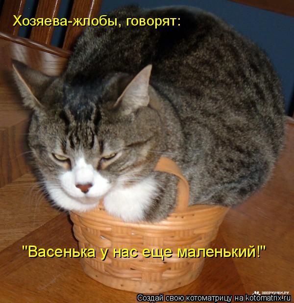 """Котоматрица: Хозяева-жлобы, говорят: """"Васенька у нас еще маленький!"""""""