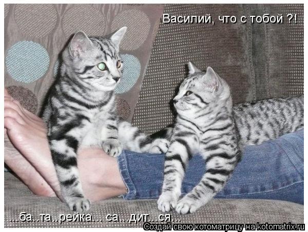 Котоматрица: Василий, что с тобой ?! ...ба..та..рейка... са...дит...ся...