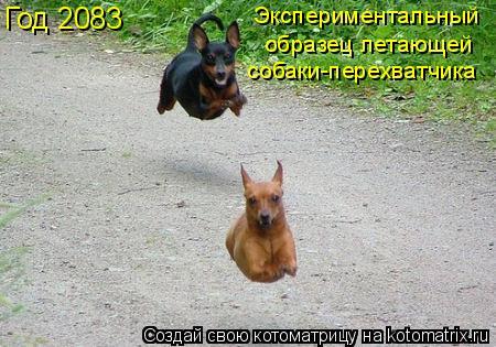 Котоматрица: Год 2083 Экспериментальный собаки-перехватчика образец летающей