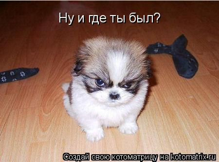 http://kotomatrix.ru/images/lolz/2008/08/22/wB.jpg