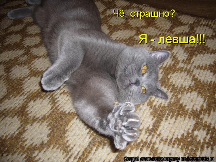 Котоматрица: Чё, страшно? Я - левша!!!