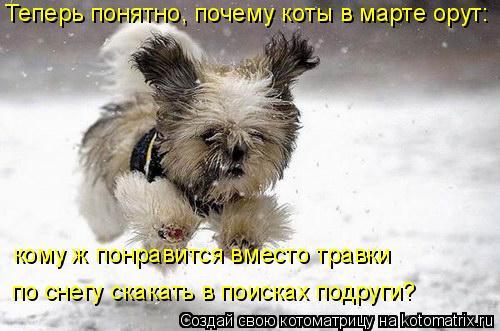 Котоматрица: Теперь понятно, почему коты в марте орут: кому ж понравится вместо травки  по снегу скакать в поисках подруги?