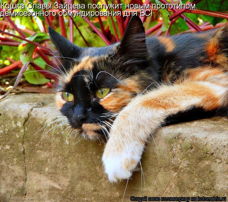 Котоматрица: Кошка Славы Зайцева послужит новым прототипом демисезонного обмундирования для ВС!