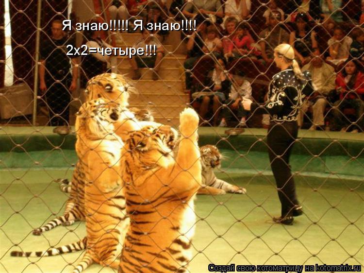 Котоматрица: Я знаю!!!!! Я знаю!!!! 2х2=четыре!!!