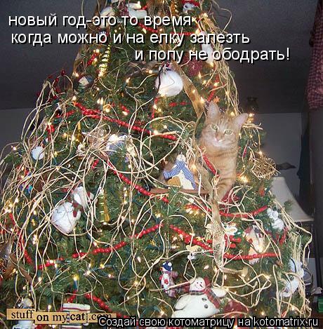 Котоматрица: новый год-это то время когда можно и на елку залезть и попу не ободрать!