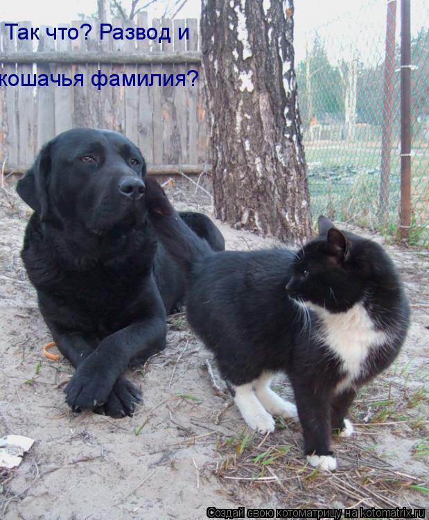 Котоматрица: Так что? Развод и кошачья фамилия?