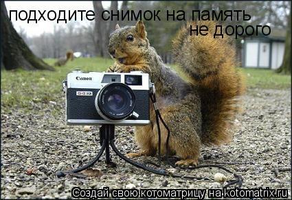 Котоматрица: подходите снимок на память не дорого