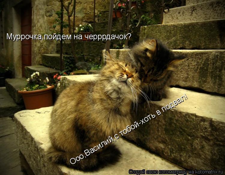 Котоматрица: Муррочка,пойдем на черррдачок? Ооо,Василий,с тобой-хоть в подвал!