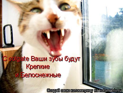 Котоматрица: С colgate Ваши зубы буду крепкие и  белоснежные С colgate Ваши зубы будут Крепкие и Белоснежные