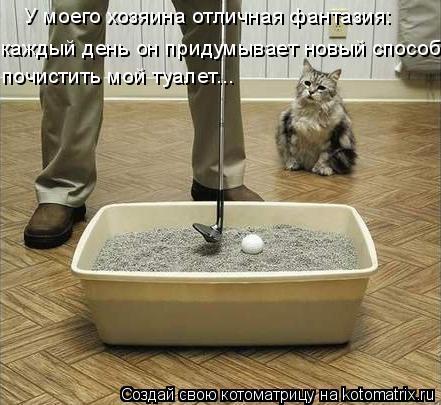 Котоматрица: У моего хозяина отличная фантазия: каждый день он придумывает новый способ почистить мой туалет...