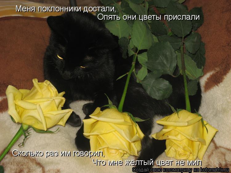 Котоматрица: Меня поклонники достали, Опять они цветы прислали Сколько раз им говорил, Что мне жёлтый цвет не мил