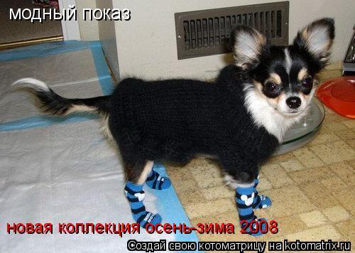 Котоматрица: модный показ новая коллекция осень-зима 2008