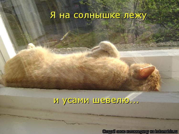 Котоматрица: Я на солнышке лежу и усами шевелю...