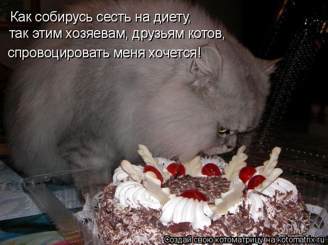 Котоматрица: Как собирусь сесть на диету, так этим хозяевам, друзьям котов, спровоцировать меня хочется!